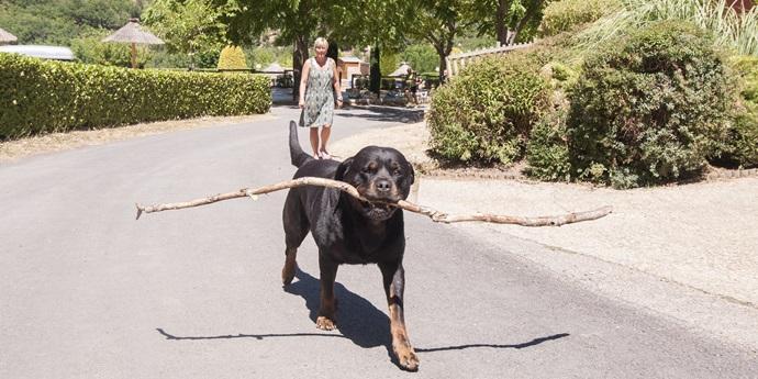 Vakantie met de hond in Aveyron