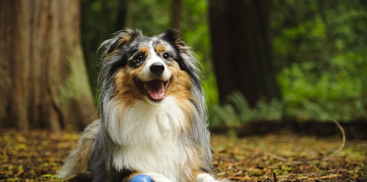 Hondenverwenweekend