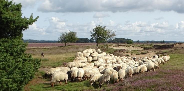Nationalparks Dwingelderveld