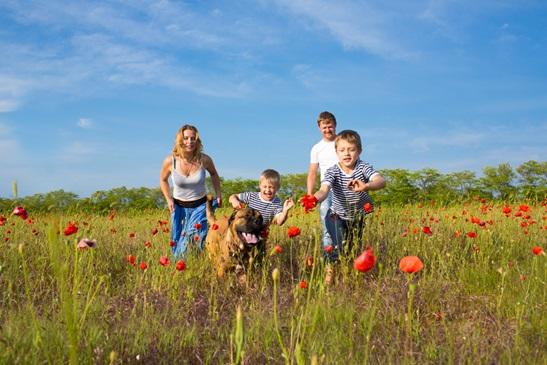 Vakantie met hond Friesland in het bos