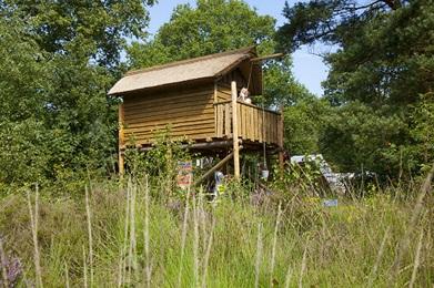 Kampeerplaats met boomhut RCN de Roggeberg